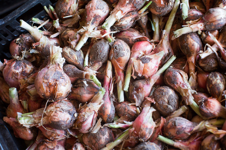 Weiser Farms shallots