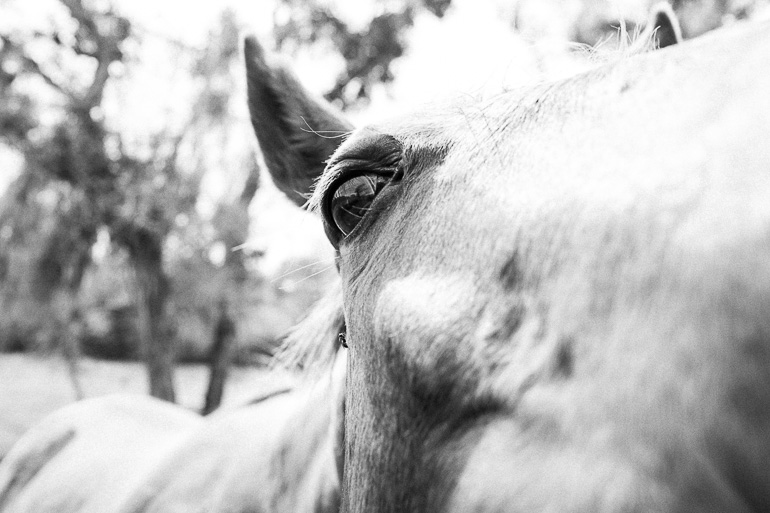 close-up-of-horse-face